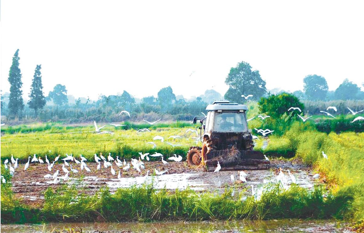 东莞香米生产加工