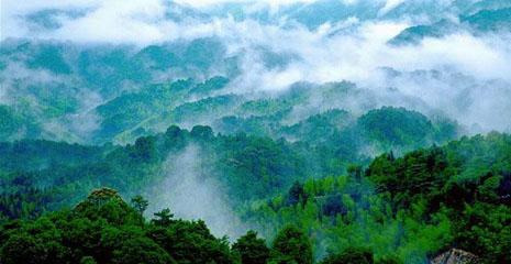 清明踏青丨清明假期双人房568元起,来大观园享受一场森林踏青之旅!