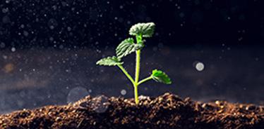 土壤:一个美妙多变的自然体